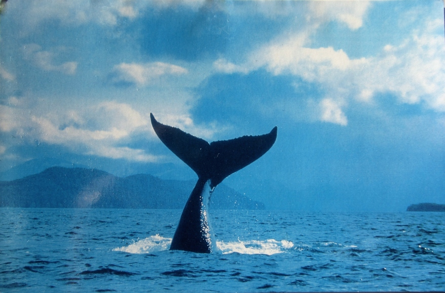 Whale spotting, Vancouver, Canada
