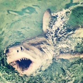 Shark-diving!