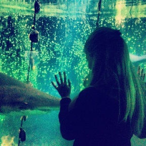 Getting up close with the sharks at Nausicaa