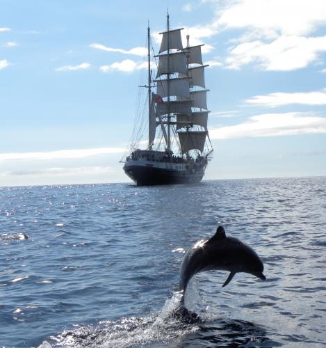 Tenacious & dolphin leaping thumbnail