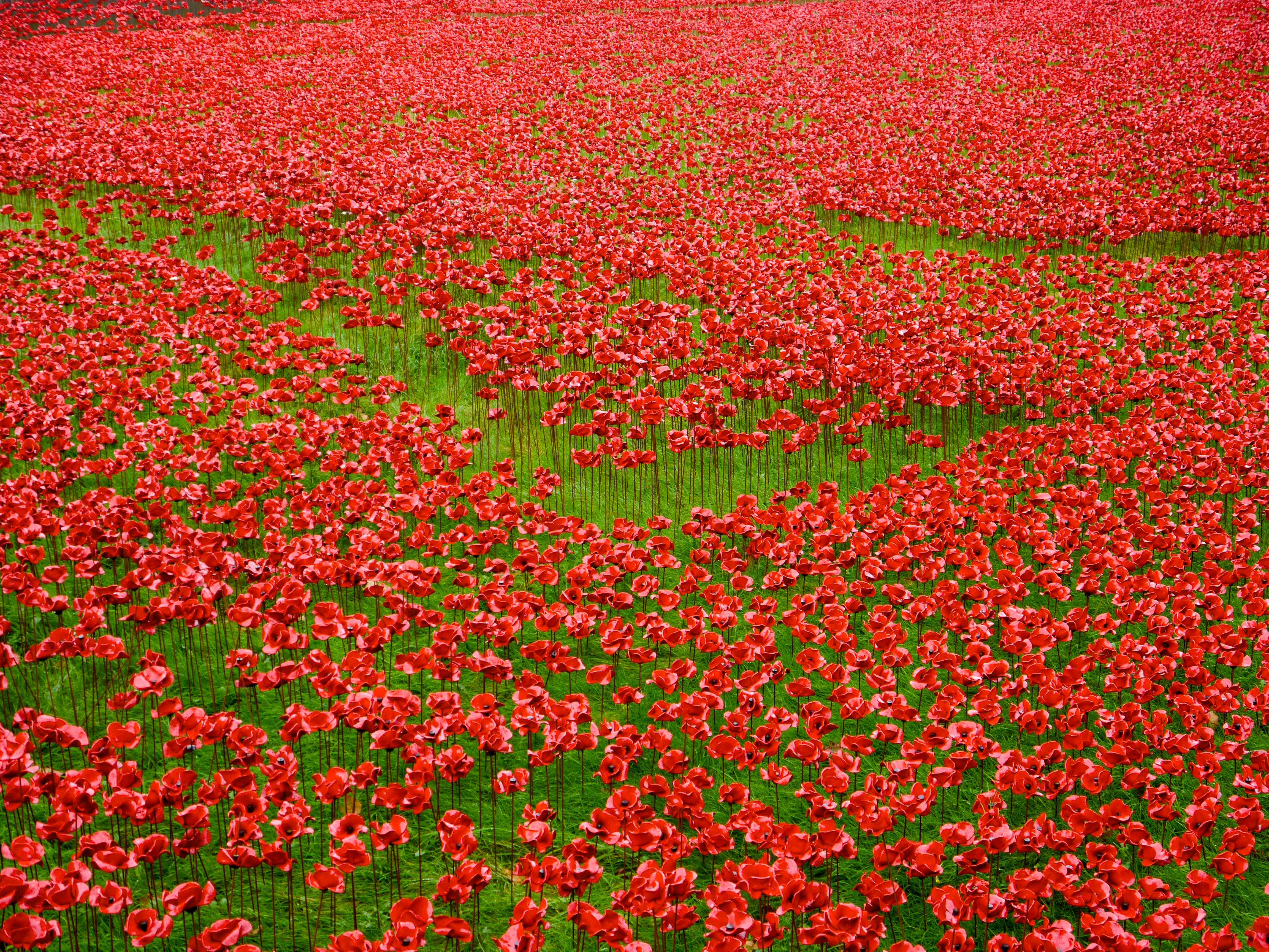 Remembrance Day And The Poppies At The Tower Of London