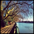 The Thames Path in BishopsPark