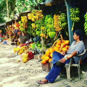 Banana_anyone__SriLanka__ttot__travel
